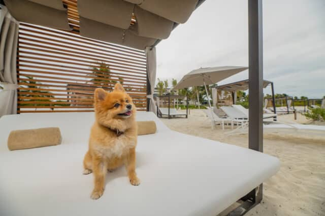 Hotel Resort Playa Mujeres: Complejo turístico Suite en Cancún